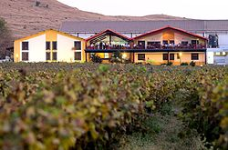 Sula_Vineyards
